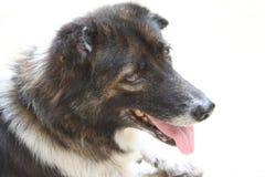 tröttad hund Royaltyfri Bild