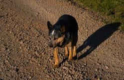 tröttad hund royaltyfri fotografi