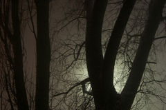 Trübsinnniederlassungen des Baums im Nebel Stockbilder
