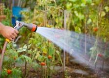 trädgårds- bevattna fotografering för bildbyråer