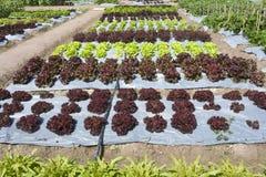 trädgårds- plastic grönsak Royaltyfria Foton