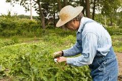 trädgårdsmästare hans beskära för växter Arkivfoton