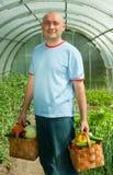 trädgårdsmästareskördgrönsaker Arkivbild