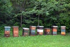 Tr?bikupor i natur arkivfoto