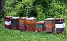 Tr?bikupor i natur royaltyfri foto