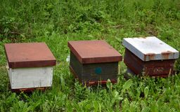 Tr?bikupor i natur royaltyfri fotografi