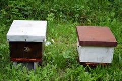 Tr?bikupor i natur royaltyfri bild
