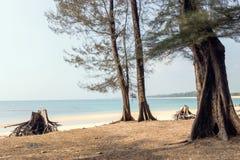 Tr?d p? stranden f?r nai yang i Thailand arkivbilder