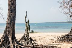 Tr?d p? stranden f?r nai yang i Thailand royaltyfri foto