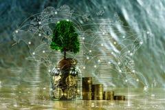 Tr?d som v?xer p? h?gen av guld- mynt, investeringen f?r tillv?xtaff?rsfinans och f?retags socialt ansvar eller CSR-?vning och royaltyfria bilder