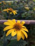 Tr?dg?rd med blommor arkivbild