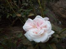 Tr?dg?rds- blommanatur royaltyfria foton