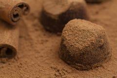 Tr?ffelpralinen auf Kakaopulver Delikatesse, k?stlicher Nachtisch lizenzfreie stockfotos