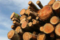 trä för journalbråtetimmer Arkivbild