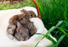 Tr?s pequenos e coelhos bonitos imagem de stock royalty free