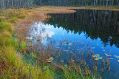 Trä sjö Arkivbilder