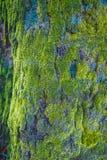 Trä som textureras med grön mossa Arkivbilder