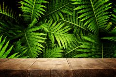 tr?tabell framme av tropisk gr?n blom- bakgrund f?r produktsk?rm och presentation fotografering för bildbyråer