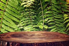 tr?tabell framme av tropisk gr?n blom- bakgrund f?r produktsk?rm och presentation royaltyfria bilder
