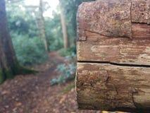 Trä överbryggar Royaltyfria Foton