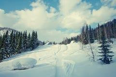 Trações da neve do fundo na floresta do inverno Fotografia de Stock