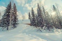Trações da neve na floresta do inverno Fotografia de Stock