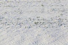 Trações da neve no inverno Imagens de Stock Royalty Free