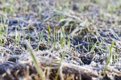 Trações da neve no inverno fotografia de stock