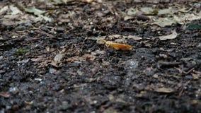 A traça amarela pequena aterrou na terra do outono filme