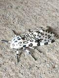 Traça do leopardo foto de stock