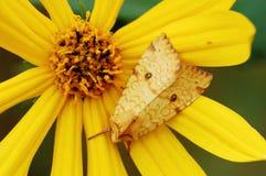 Traça e flor Imagem de Stock Royalty Free