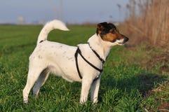Traço de cheiro do cão fotografia de stock
