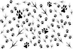 Traços de animais Imagem de Stock