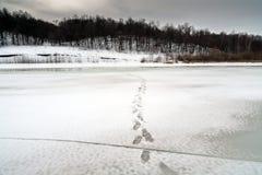 Traços de gelo que alcançam a costa Fotos de Stock Royalty Free