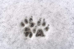 Traços de pata de dois cães na neve fresca do fundo branco Fotografia de Stock Royalty Free