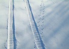 Traços em uma neve Foto de Stock Royalty Free
