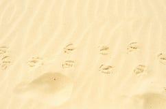 Traços na areia, areia amarela na praia sobre o oceano, mar Foto de Stock