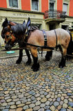 Traído por caballo Foto de archivo libre de regalías
