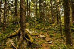 Traînée appalachienne sur la montagne de Whitetop en Virginie images libres de droits