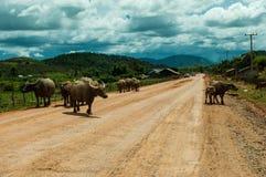 Traînée au Laos photographie stock