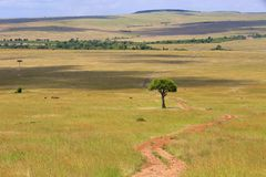 Traînée au parc national de Mara de masai Photos stock