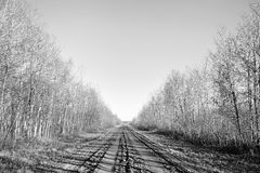 Traînée boueuse par la forêt Photo stock