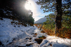 Traînée couverte par neige le long du Strbske Pleso Images libres de droits