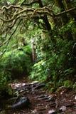Traînée crawly rampante dans les bois images libres de droits