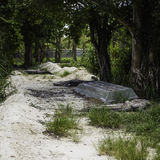Traînée d'alligator Photos stock