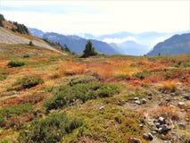 Traînée d'arête de lagopède alpin avec la couleur de chute Photographie stock