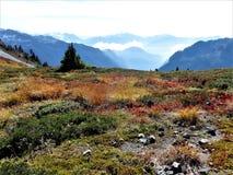 Traînée d'arête de lagopède alpin avec la couleur de chute Photo stock