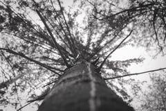 Traînée d'arbre d'éclairage Vue d'arbre d'en haut Photos libres de droits