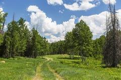 Traînée d'entraînement à quatre roues en Utah Photo libre de droits