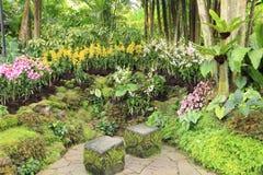 Traînée dans les jardins botaniques de Singapour Photographie stock libre de droits
